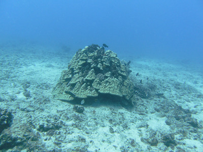 Reef outcropping